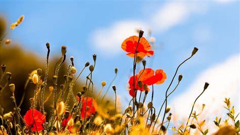 images arriere plan bureau gratuit les plus beau fond ecran fleurs fond ecran pc