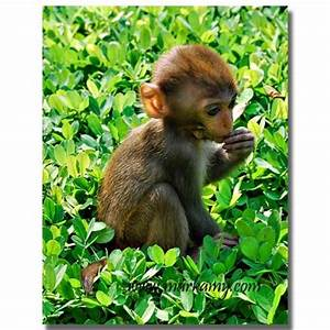 Really Cute Baby Monkeys Pictures to Pin on Pinterest ...