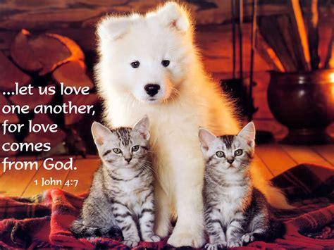 gospel love animal quotes quotesgram