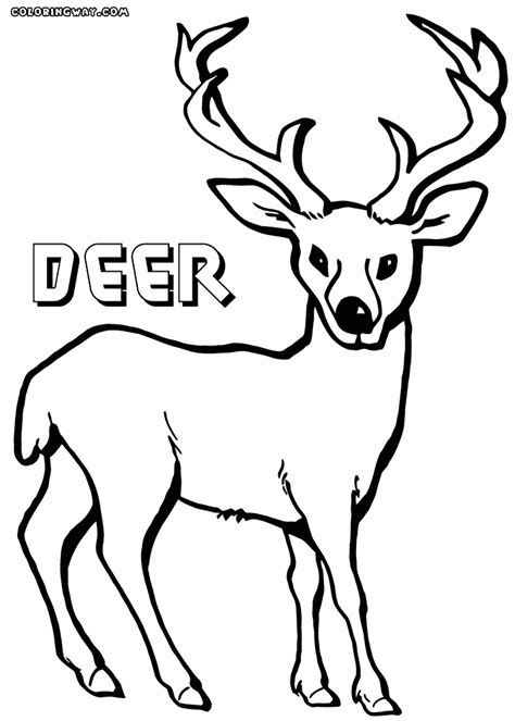 deer coloring pages coloring pages    print