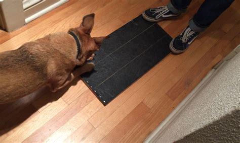 file dog nails nail ftempo