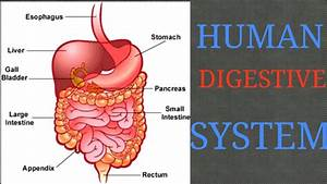 Human Body - Digestive System In Hindi Part 1