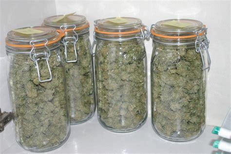 chambre de sechage cannabis tutos récolte et séchage du cannabis