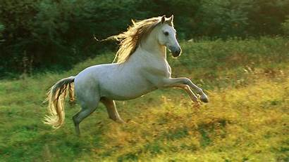Horse Wallpapers 1080 1920