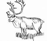 Elk Coloring Pages Hunting Moose Grass Coon Dog Horn Turkey Bow Mountain Drawing Rocky Pheasant Sharp Stepping Silhouette Print Printable sketch template