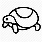 Terrarium Icon Turtle Amphibian Zoo Hobby Pet