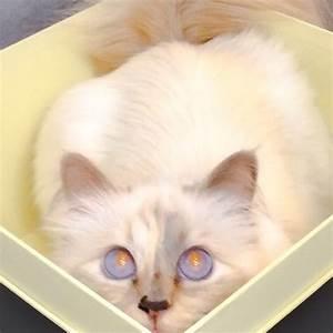Choupette Chat Karl : mode karl lagerfeld son chat choupette se lance dans le chatbiz ~ Medecine-chirurgie-esthetiques.com Avis de Voitures