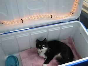 Diy outdoor cat house petdiyscom for Best dog door for winter