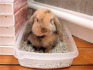 Maison Pour Lapin : les 3 petits lapins informations et astuces pour les ~ Premium-room.com Idées de Décoration