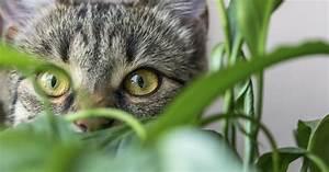 Welche Pflanzen Sind Nicht Giftig Für Katzen : giftige und ungiftige pflanzen f r katzen mein sch ner garten ~ Eleganceandgraceweddings.com Haus und Dekorationen