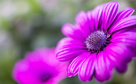 Purple Flower Hd Wallpaper Download For Mobile