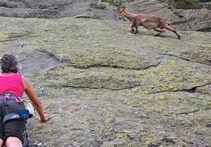 【何故そこにいる】ありえない断崖絶壁を登る山羊たちを激写13選 | CuRAZY [クレイジー]