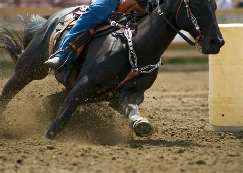 horse barrel racing horses breed breeds focus henry