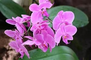 Orchidee Klebrige Tropfen : krankheiten bei orchideen 12 pilze probleme an ~ Lizthompson.info Haus und Dekorationen