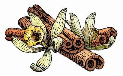 Cinnamon Vanilla Facts Nutrition Fat Low Siggis