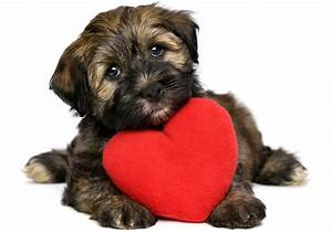 heartworm in dogs the dog owners guide