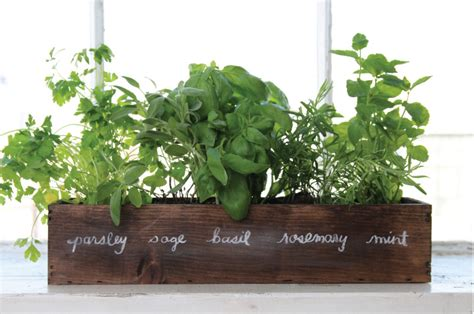 Window Sill Herb Garden Box by How To Grow A Windowsill Herb Garden