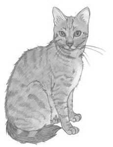 cat sketch 404 not found deviantart