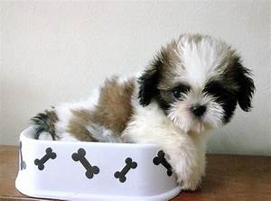 Cute Pets World: November 2012