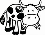 Cow Coloring Pages Grass Printable Funny Eating Farm Animal Baby Outline Cows Cartoon Animals Print Sheets Adult Sheet Valentines Zoo sketch template