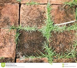 Orange Stone Block Pavement Texture Stock Photo ...