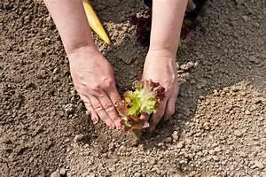 Ab Wann Baugenehmigung : ab wann balkon bepflanzen kr uter balkon wann pflanzen hauptdesign wann balkon bepflanzen ~ Orissabook.com Haus und Dekorationen