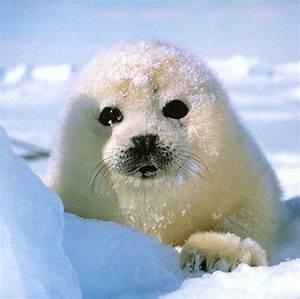 Top 20 World's Cutest Animals