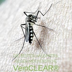 Mittel Gegen Mücken : die besten mittel gegen m ckenstiche oh nein schon wieder ein juckender m ckenstich und nun ~ Frokenaadalensverden.com Haus und Dekorationen