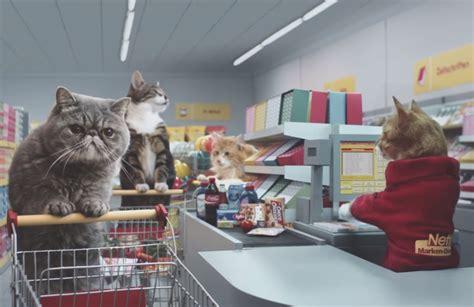katzen shoppen bei netto