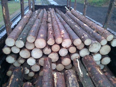 offer spruce logs  lumberboardstimber  sale wood