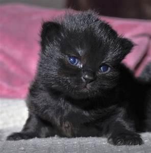 newborn kitten So cute. Incensewoman | CATS!!! | Pinterest