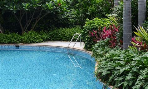 plants to put around a pool softening pool hardscapes hayward poolside blog