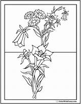 Coloring Pages Flower Flowers Bouquet Pdf Roadside Colorwithfuzzy sketch template