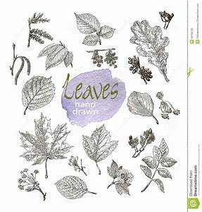 Collection Of Highly Detailed Hand Drawn Leaves And ...