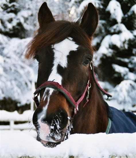 horses cold weather keep safe tips feeding care horse
