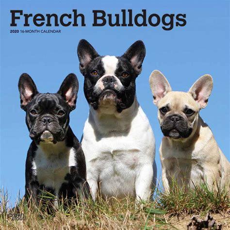 french bulldogs calendar animal den
