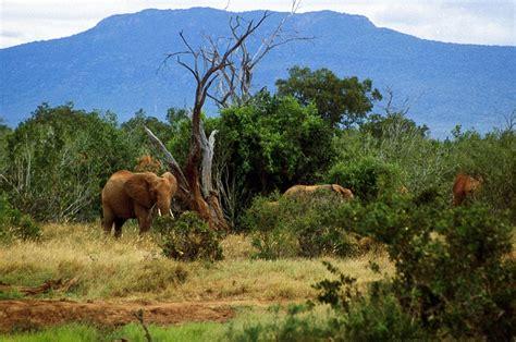 2 Day Amboseli Road Safari from Nairobi, Kenya   AJ Tours ...