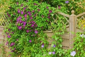 Plantes Grimpantes Mur : choisir des plantes grimpantes pour habiller un mur un ~ Melissatoandfro.com Idées de Décoration