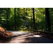 Nature Road Tree Leaves Foliage Sun Trees Background
