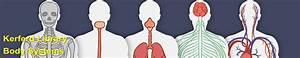 Respiratory System - Body Systems