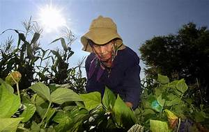 Hmong farming program seeks to introduce Asian crops to ...