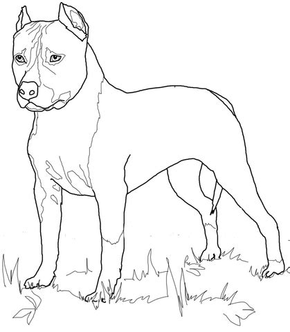 american staffordshire terrier coloring page supercoloringcom