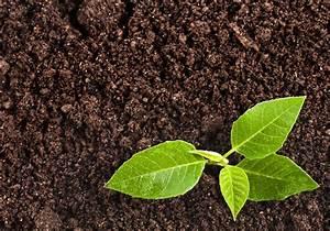 Kompost Und Erden : kompost erde ihre nr 1 als zulieferer f r kompost erde und kies ~ A.2002-acura-tl-radio.info Haus und Dekorationen