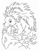 Porcupine Coloring Pages Cute Printable Lesson Printables Getcoloringpages Kidsuki sketch template