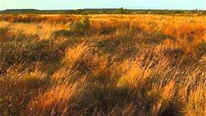 Grasslands In Australia And Africa Youtube