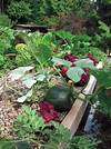 Grow up! Build an Edible Rooftop Garden - Garden Therapy vegetable roof garden