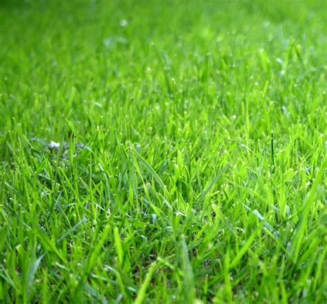 garden grass finra issues investor alert about chasing returns in risky products wallstreetfraudblog com