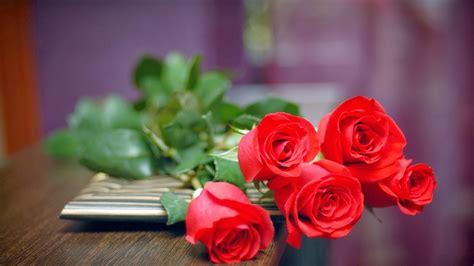 wallpaper bunga mawar merah deloiz wallpaper