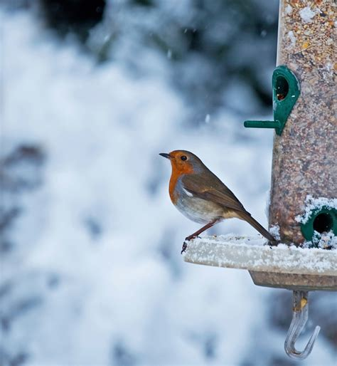 what should i feed birds in the winter earnshaws