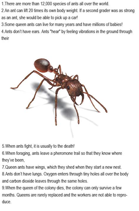 fun facts about ants for preschoolers facts about ants for childhood education 219